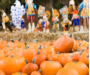 pumpkins in a patch with scarecrows and halloween decorations in background