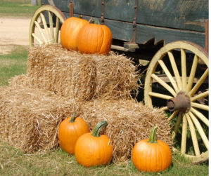 pumpkins on hay bale with old wagon in background